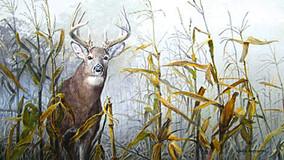 Mark Anderson – Wildlife Artist Exhibit at the Red Brick Gallery