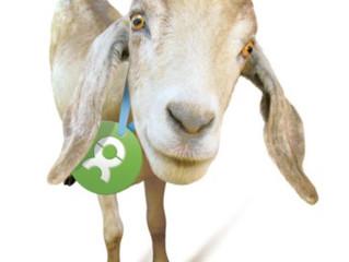 OxFame