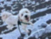 Finnegan snow (2).jpg