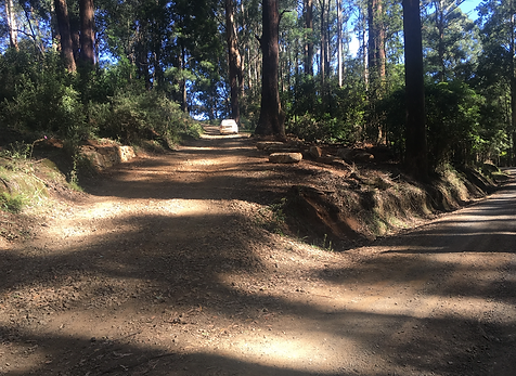 Entrance to Toolangi Heights