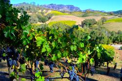 Wine Adventures | Custom Wine Tours