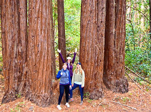 SHWT-2-Grp of 3-redwoods-V2_edited.jpg