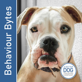 Behaviour Bytes - Human Attention & Canine Play