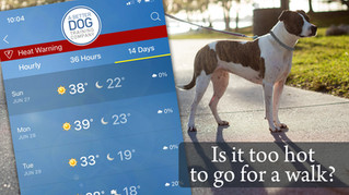 Is The Ground Too Hot To Walk Your Dog?