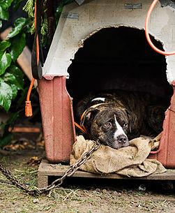 Family Dog or Resident Dog