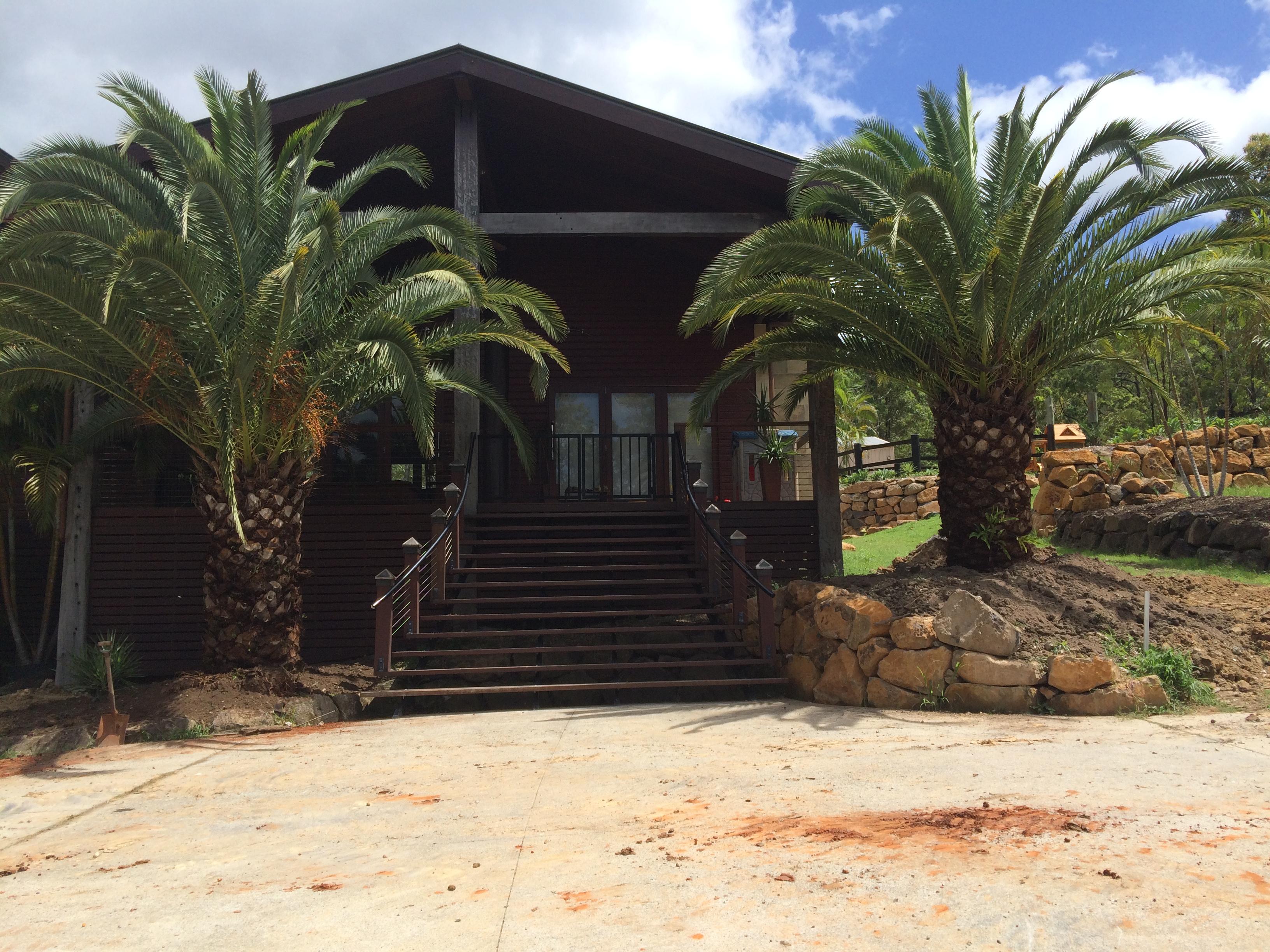 Canary island date palm for sale brisbane