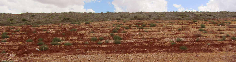 Arid seed plantin