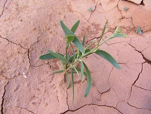 Seedling growing in arid soil