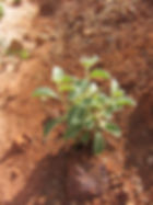 Plant growing in arid land
