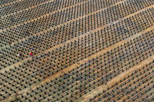 Asian Agri Aerial Photography by Yunaidi Joepoet - Jakarta, Indonesia