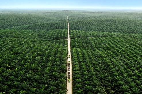 Asian Agri. Aerial Photography by Yunaidi Joepoet - Jakarta, Indonesia