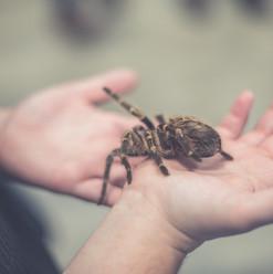 manipulation et formation animaux
