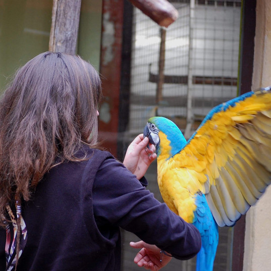 manipulation perroquet