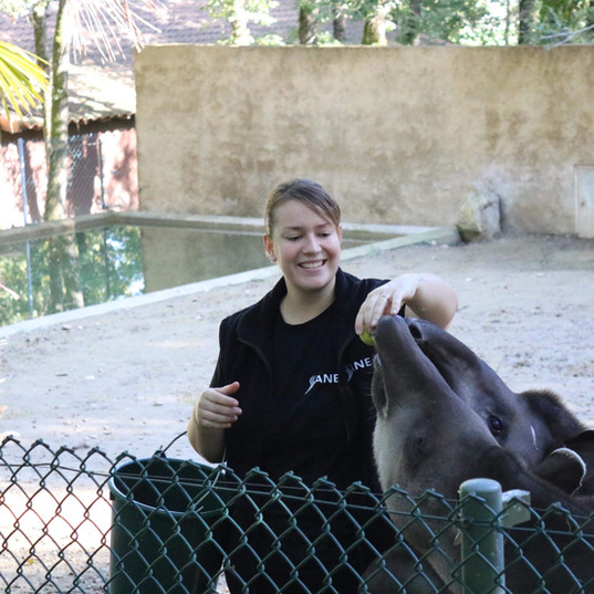 nourrissage tapir animal zoo