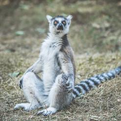 zoo, association animalière