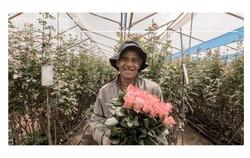 Sunshine Bouquet - Cundinamarca