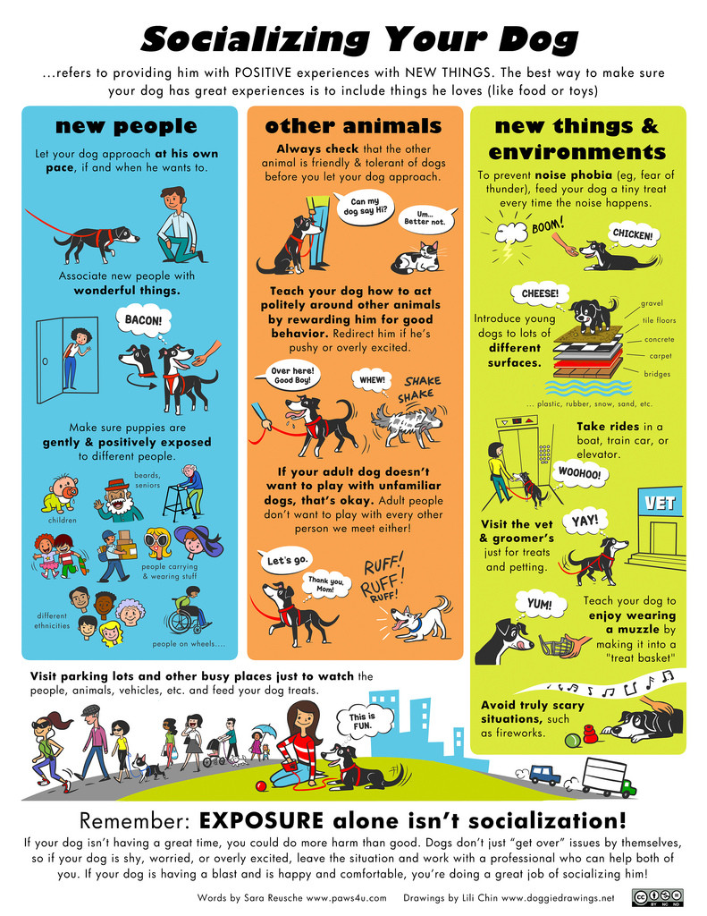Graphic about socializing your dog