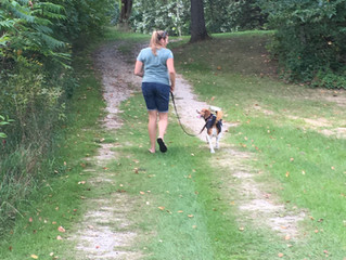 Walking is something we do WITH our dogs