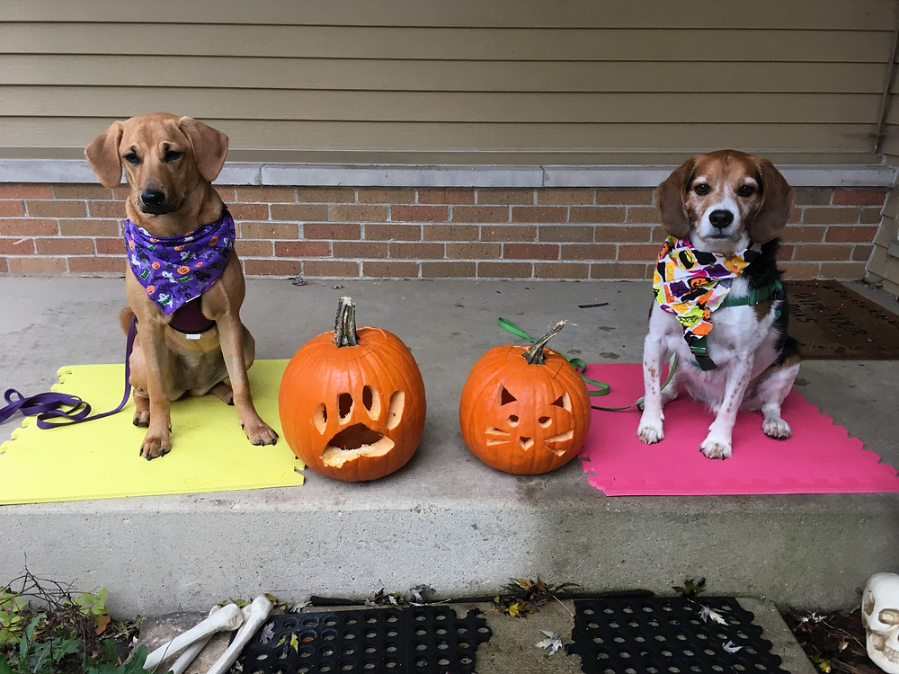 Two dogs on halloween