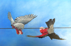 Galahs on the Wire - Detail