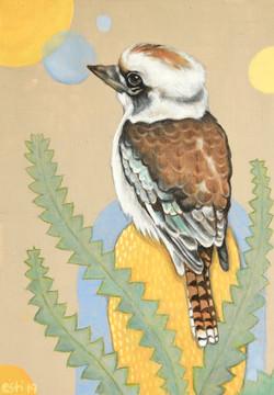 Kookaburra on Banksia 1