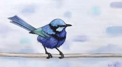 Blue Wren 1