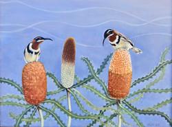 Western Spinebills on Banksia