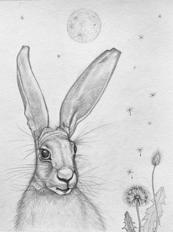 Hare and the Moon
