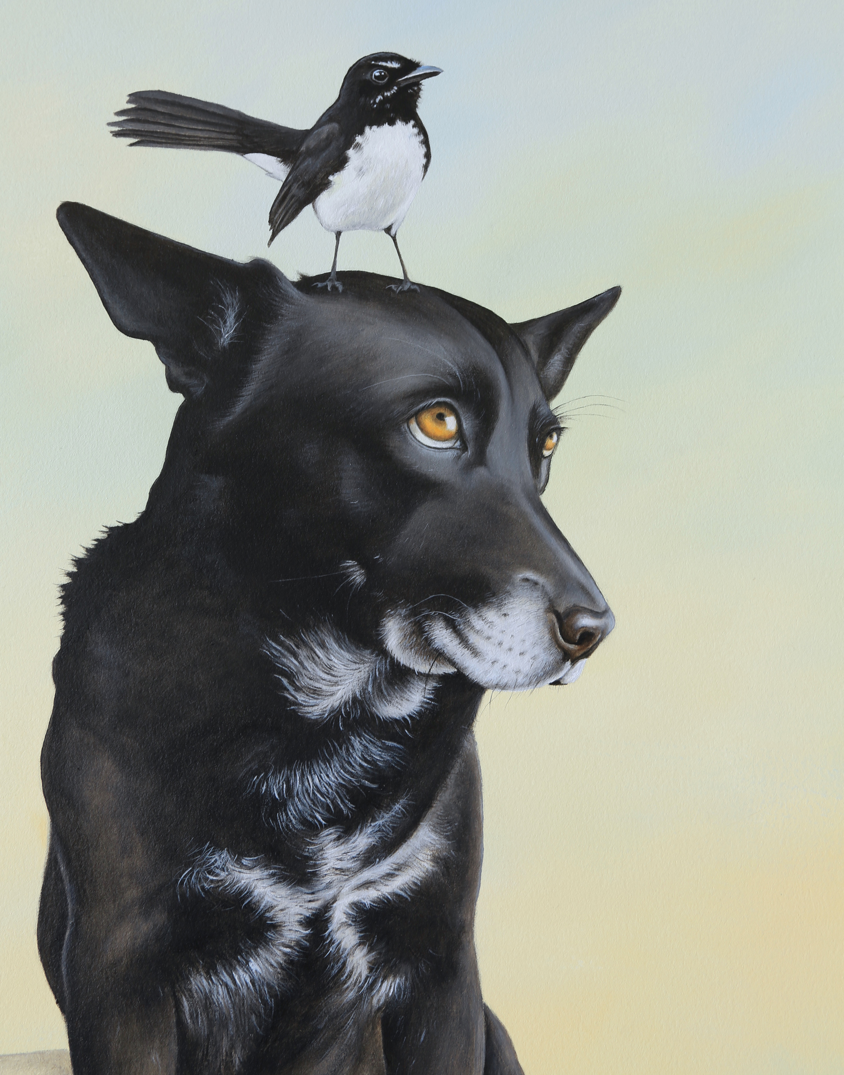 Rocket and the Willie Wagtail
