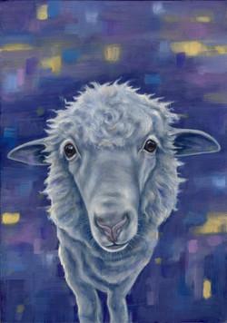 Summer the Sheep