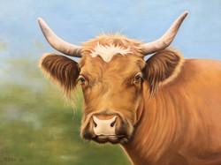 Pretty Brown Cow