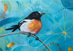 Robin on Turquoise 2