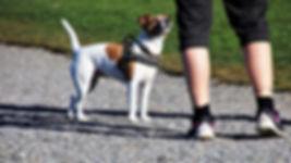 dog-3297240_960_720.jpg