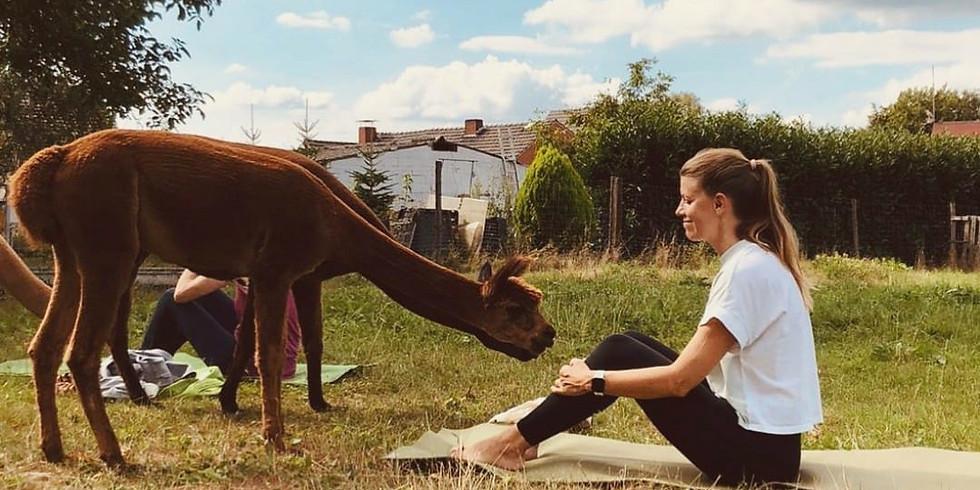 Kuscheliges Outdoor Yoga (4)