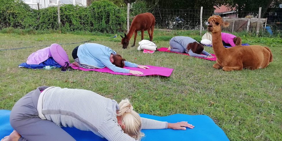Kuscheliges Outdoor Yoga (2)