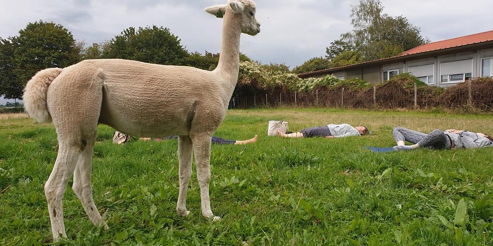 Kuscheliges Outdoor Yoga (3)