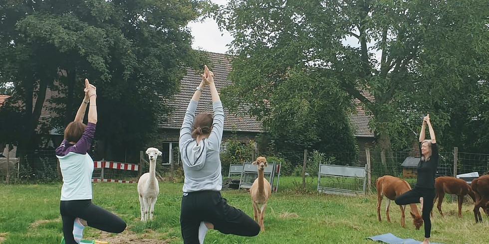 Kuscheliges Outdoor Yoga (1)