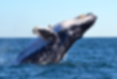 whale_edited.png