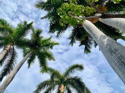Sunny skies of Mazatlan and lush vegitation with years of growth.