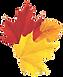 Autumn%2520leaves%2520bunch_edited_edite