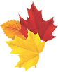 Autumn%20leaves%20bunch_edited.png