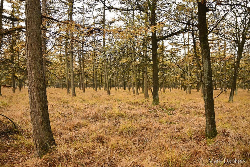 Een typisch Nederlands stukje bos, Huis ter Heide