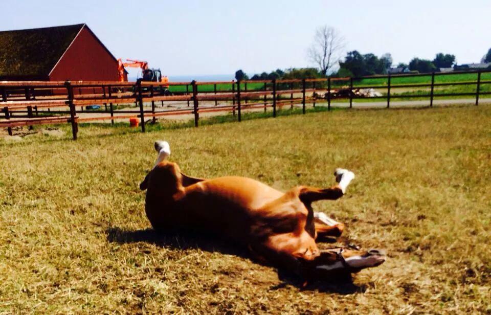En häst måste få vara häst