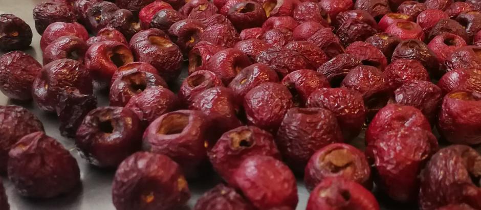 Lyofilizované třešně + test sušení peckovin
