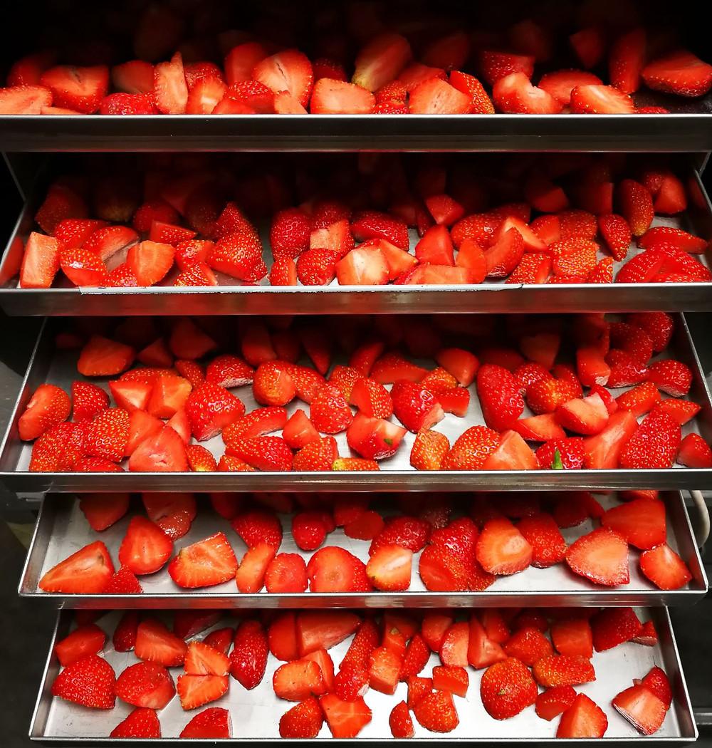 Jahody naskládané v potravinářském lyofilizátoru AMARU