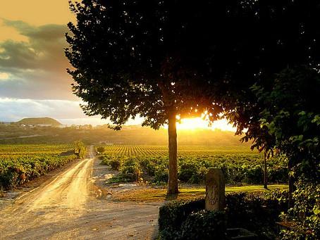 La Asociación de Bodegas por la Calidad (ABC) se posiciona en defensa del paisaje del viñedo