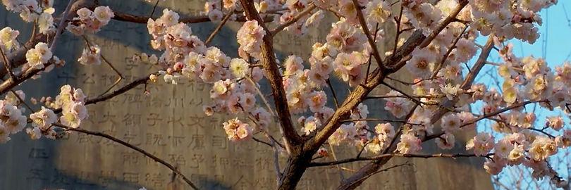 рейки-символы-сакура-цветок-развитие.jpg