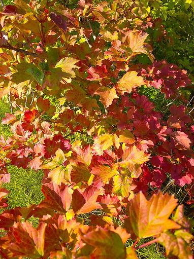 Осень-желкый-красный-листья-пророда