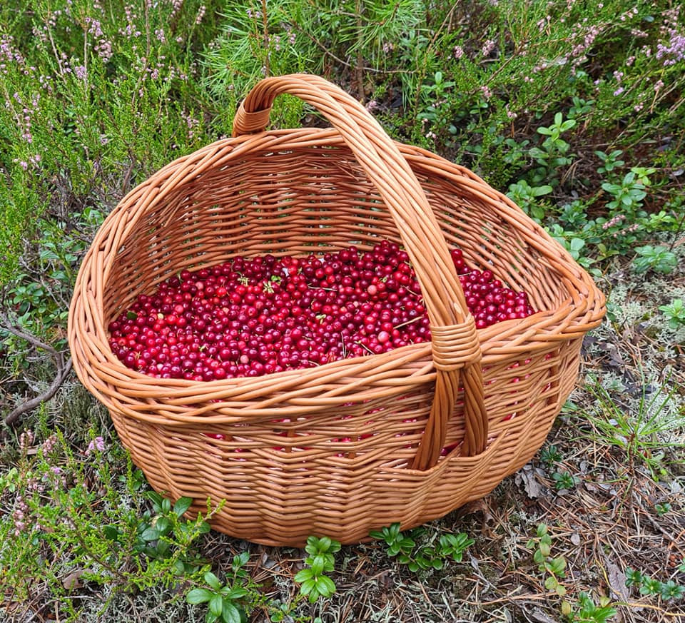 Basket with lingonberries