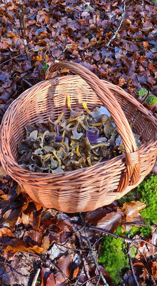 Wild mushrooms Norway